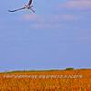 Everglades_02-25-07_0526