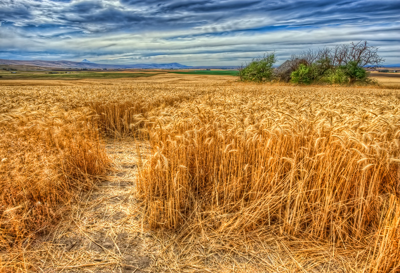 Love Shack <br /> ~Wheat Fields~<br /> Goldendale, Washington