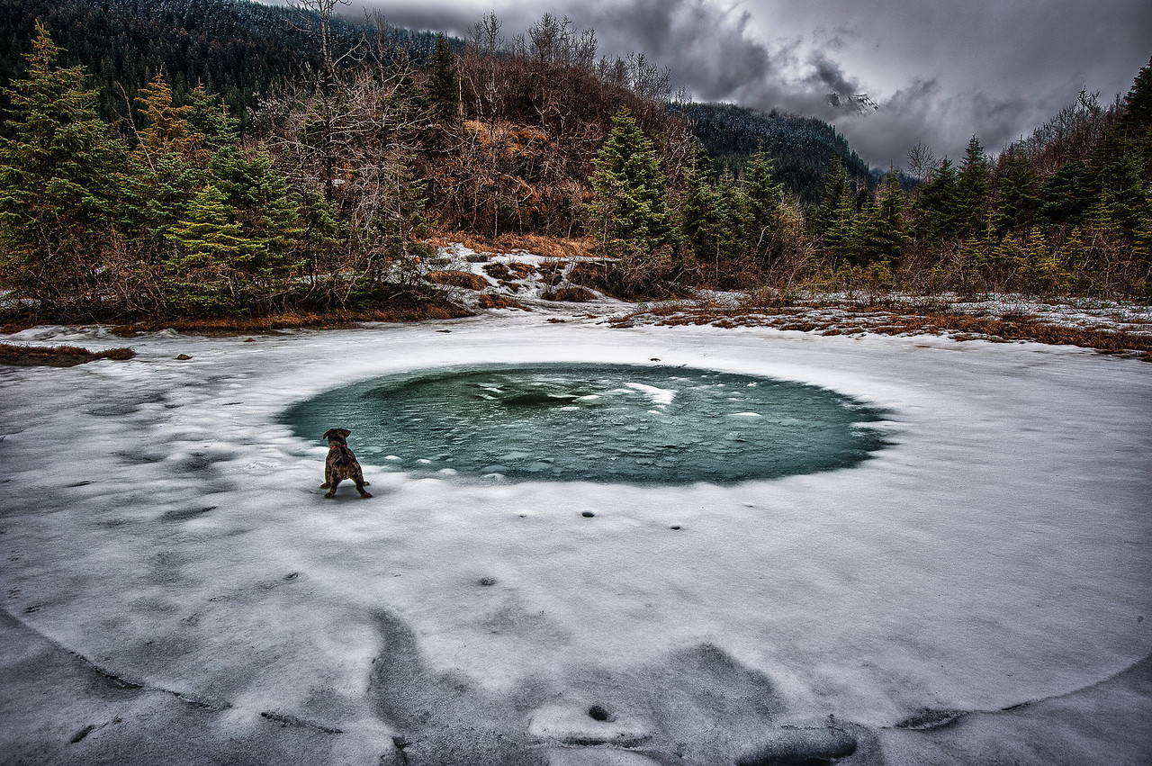 A 3 EV HDR Photograph of my little dog in awe of snow melting in the Mendenhall Valley area of Juneau Alaska.  Taken with a Nikon d700, edited in HDR Efex Pro & Lightroom.