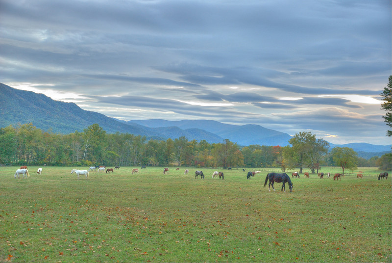 Smoky Mountain Horses