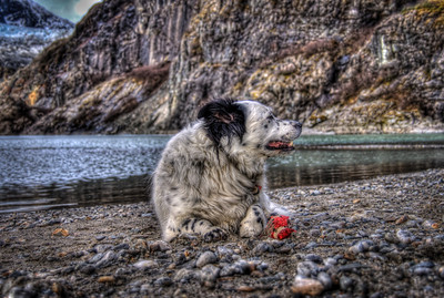A 5 EV HDR photograph of my dog Bondo & a tennis ball he destroyed, while playing at the Mendenhall Lake at the Mendenhall Glacier in Juneau Alaska.  Shot with a Nikon d700, edited in Photomatix & Lightroom.