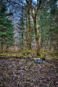 A 5 EV HDR photograph of remnants found near the Treadwell Gold Mine on Douglas Island Alaska, near Juneau Alaska.  Shot with a Nikon d700, edited in Photomatix & Lightroom.