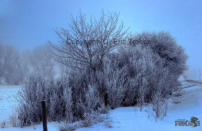 Ice forming on trees near Lincoln, NE.