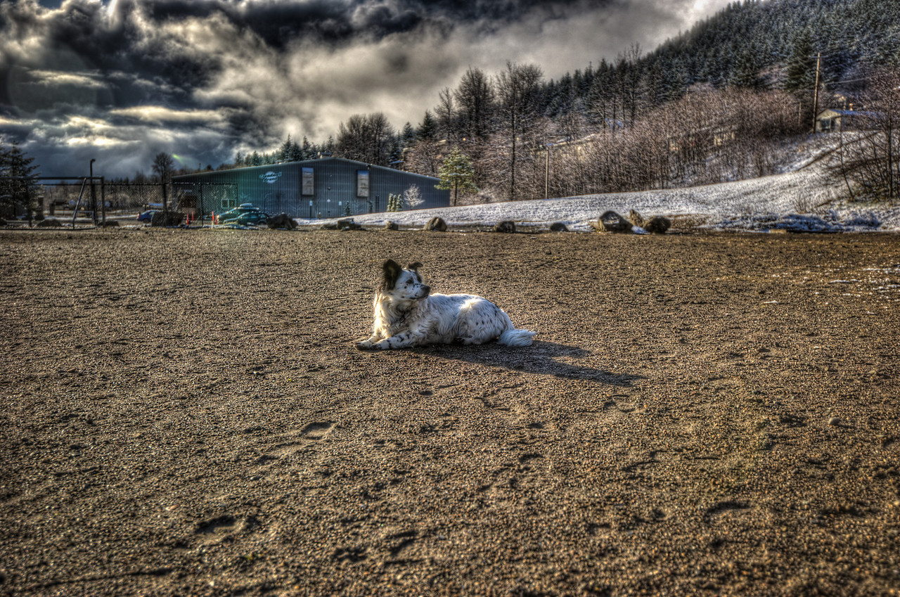 A 5 EV HDR Photograph of my little dog Bondo taken during the winter time near the Treadwell Ice Arena on Douglas Island Alaska, near Juneau Alaska.  Shot with a Nikon d700, edited in Photomatix & Lightroom.