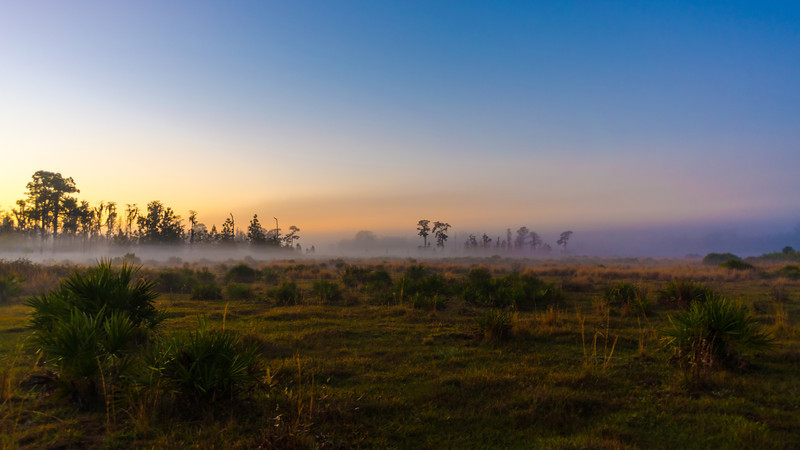 First Light on the Flatwoods