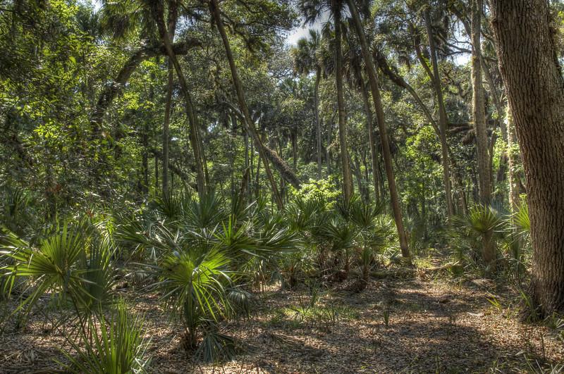 Very Florida