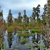 Cypress Head I