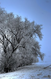 Ice forming on trees near Lincoln, NE
