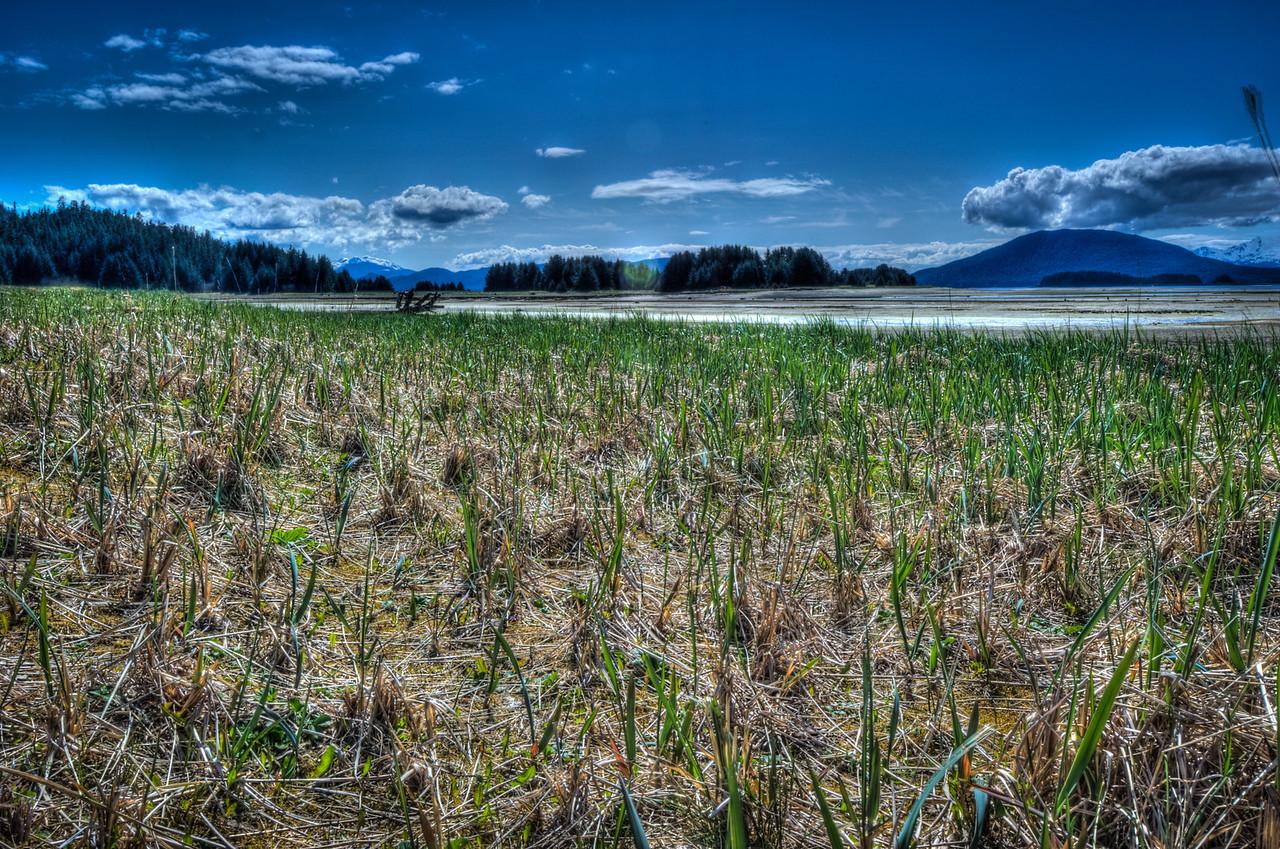 eagle beach grass