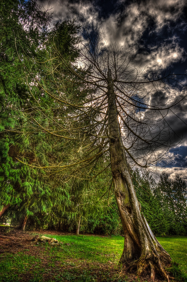 A 5 EV HDR Photograph of a tree on a farm in a field in Sedro Woolley Washington.  Shot with a Nikon d700, edited in Photomatix & Lightroom.