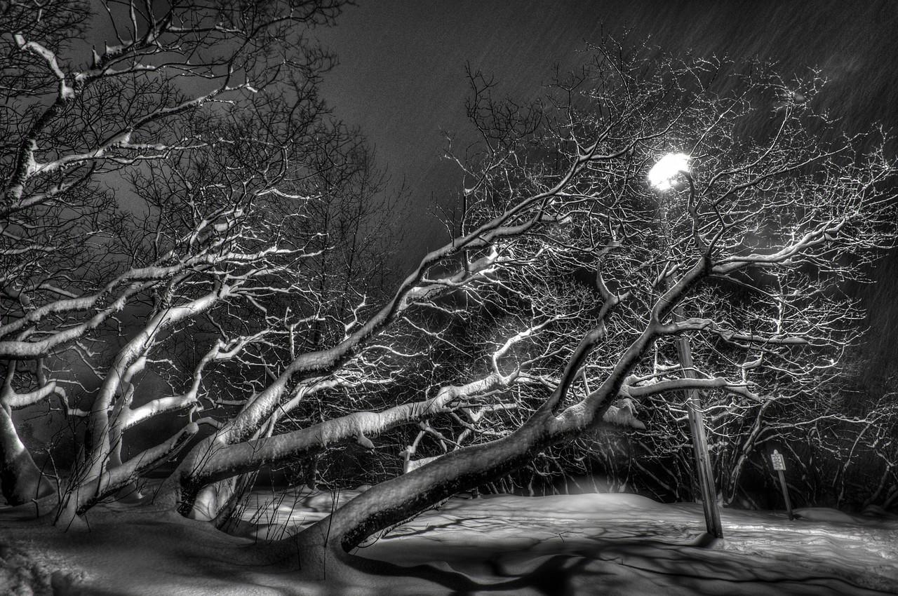 A 5 EV HDR B&W Photograph of a snow laden tree near the historic Treadwell Gold Mine on Douglas Island Alaska, near Juneau Alaska.  Taken with a Nikon d700, edited in Photomatix & Lightroom.