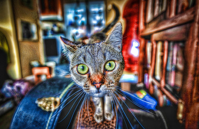 A 3 EV HDR photograph of my cat Squid standing on a guitar case, notice the little movement in her whiskers.  Shot with a Nikon d700, edited in Photomatix & Lightroom.