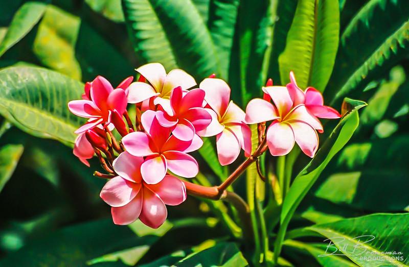 Hawaii 29
