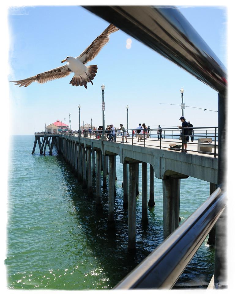 HUNTINGTON BEACH PIER SEAGULL