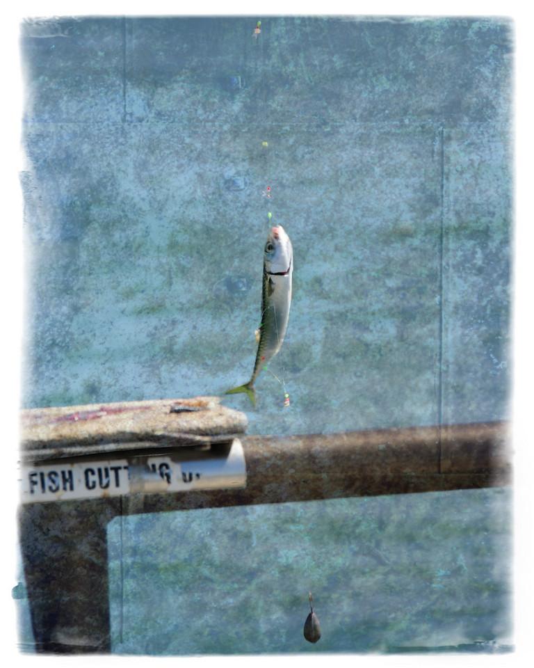 HUNTINGTON BEACH PIER_-HELP