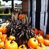 Nice Halloween Pumpkins to Carve