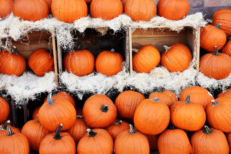 Halloween Pumkins in Orange County California