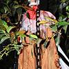 Skeleton in Orange County California