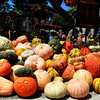 Pumpkins and Gourds for Halloween