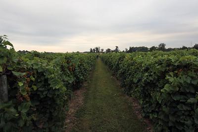 Large Vineyard