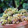 Great Grapes!