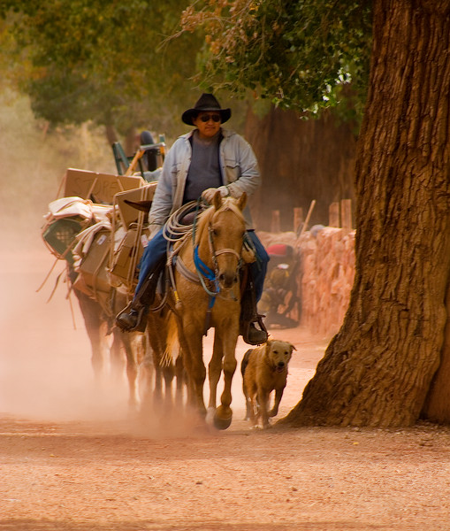 HA114  Pack Train Arriving with supplies for Supai village
