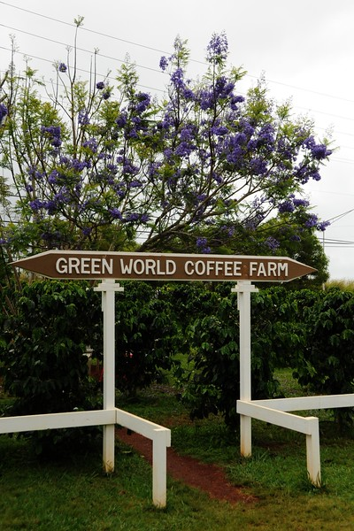OUR COFFEE DRINKERS WANTED TO SEE A COFFEE FARM