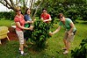 PICKING THEIR COFFEE DRINKS RIGHT FROM THE COFFEE BUSH