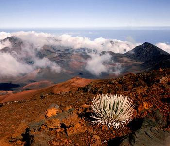 Haleakala Crater Silversword