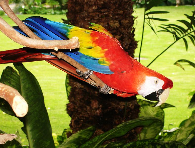 Parrot in Hawaii 2