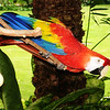 Parrot in Hawaii 2