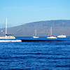Lahaina Harbor in the morning 2