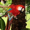 Parrot in Hawaii