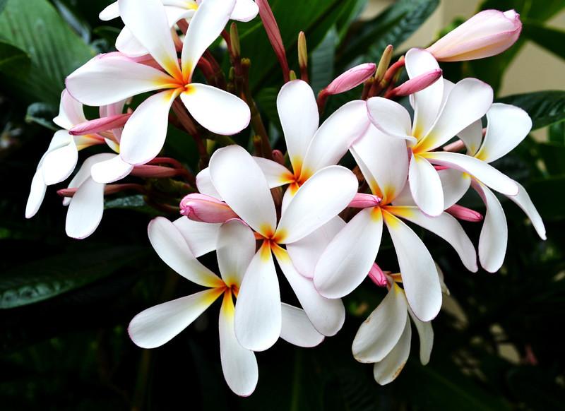 Flowers in Maui Hawaii 20