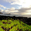 Morning Vista on East Shore of  Oahu