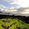 Morning Vista on East Shore of  Oahu