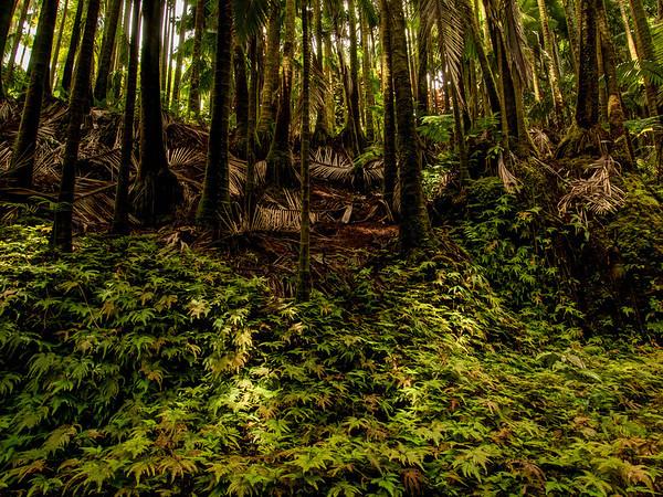 Hawaii Tropical Botanical Garden- Hilo - Big Island - Hawaii - September 2012