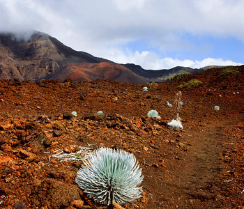 Haleakala Crater Silversword Loop Trail