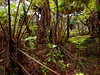 Volcano National Park - Big Island - Hawaii - September 2012