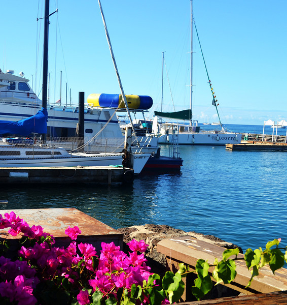 Harbor at Lahaina in Maui Hawaii
