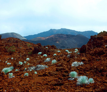 Haleakala Crater Silversword Loop Trail