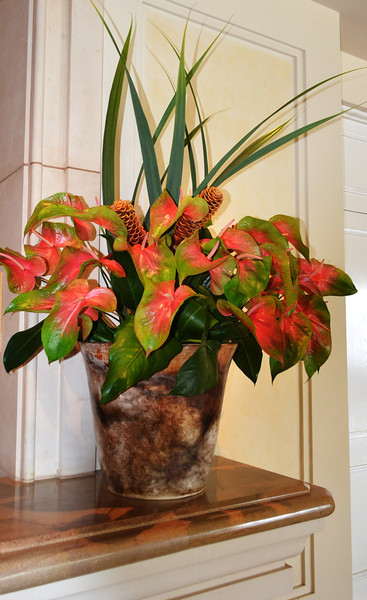 Flowers in Maui Hawaii