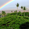 Just another rainbow in Maui