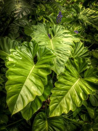 Botanical Gardens near Hilo - Big Island - Hawaii - September 2012