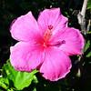 Flower in Maui Hawaii