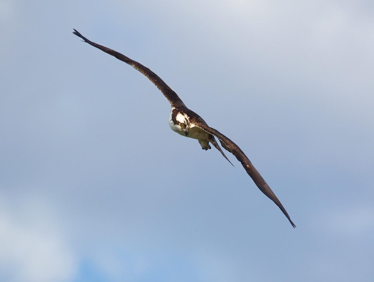 Osprey Click Ponds, Viera, FL
