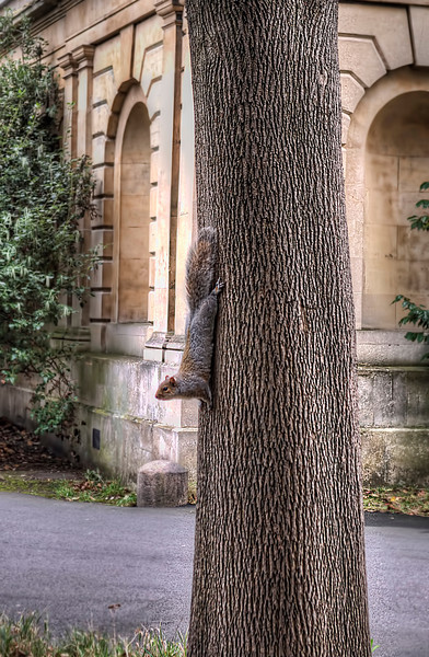 Brompton cemetery squirrel up tree