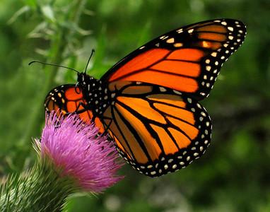 Heavenly Butterflies