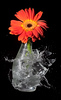Sound-triggered High-speed flash picture, using the HiViz Delayed Sound Trigger circuit - various shots using a pellet gun, 4/9/09. Vase with single Gerbera, 4/10/09.