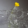 Sound-triggered High-speed flash picture, using the HiViz Delayed Sound Trigger circuit - various shots using a pellet gun, 4/9/09. Vase with single Desert Marigold, 4/9/09.
